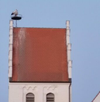 Storch auf dem Kirchturm